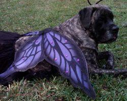 10 Costumes That Prove Mastiffs Always Win At Halloween