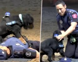 Police Dog Learns CPR To Save Police Officer's Life