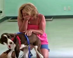 Quadriplegic Dog Regains Use of Legs, Owner's Reaction is Pure Joy