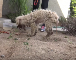 Stray Could Hardly Eat, So Rescuers Couldn't Imagine She'd End Up Such A Beautiful Dog