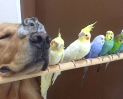 Bob The Golden Retriever Is Always Smiling, And It's All Because Of His Friends