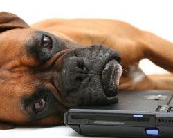 82 Most Popular Boxer Dog Names