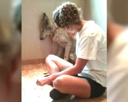 Lonely Wolf Dog Wouldn't Open Up, Until His True Love Walks In
