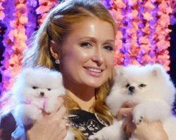 12 Celebrity Pomeranian Owners