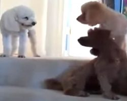Dogs Tattletale On Sister To Mom, Video Will Bring Back Memories From Your Childhood
