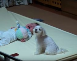 Family Dog Makes Baby Stop Crying By Crying Even Louder