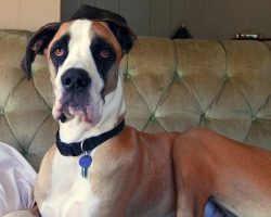 12 Horrifying Things You Didn't (Want to) Know About Great Danes