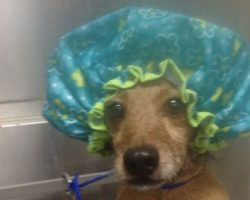 10 Pictures Only Dachshund Owners Will Think Are Funny