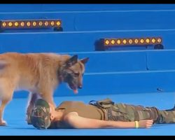 Dancer Falls To The Ground, Dog's Response Brings Audience To Their Feet