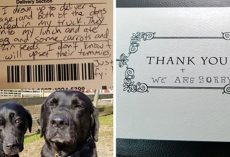 Dogs Steal Mail Carrier's Lunch— and Make Up for it Adorably