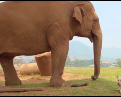 It's A Small World After All – Baby Elephants and Stray Dogs Co-Exist in Magical Refuge