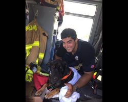 Hunky Miami firefighter rescues senior dog from drowning in bay