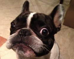 6 Problems Only French Bulldog Owners Will Understand