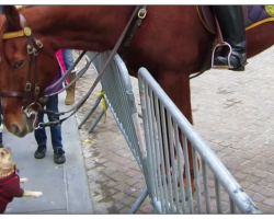 Frenchie Goes Up To Police Horse, Their Encounter Sets Internet On Fire