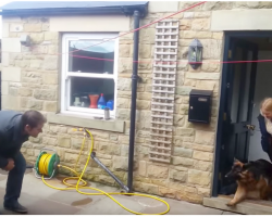 Dog Stays With Sitter For Months, Dog's Reaction When Her Owner Shows Up Is Internet Gold