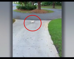 Dad Sees Puppy Wrestle With Something At The Edge Of Their Driveway, Quickly Runs Over