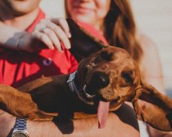 16 Things That Make Dachshunds Happy