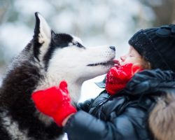 Here Are 12 Essential Facts Husky Lovers Must Always Remember. The last one made me cry.