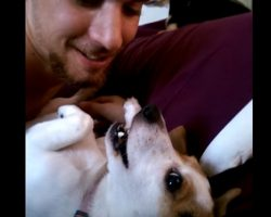 This Jack Russell Terrier Simply Wants To Be Kissed