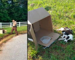 Officer Spots 10-Week-Old Puppy — In A Box By The Road