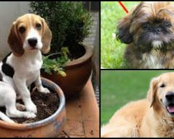 8 Dog Breeds That Look And Act Like Puppies The Longest
