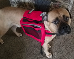Service Dog Went Looking For Help For His Owner Only To Get Swatted Away