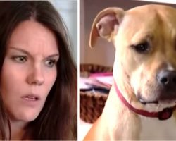 Mom Awakens To Odd Grumble From Pit Bull Prompting Her To Check Son & Discover Dogs Actions