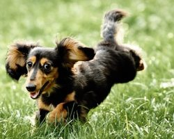 Things You Probably Didn't Know About Rabbit Dachshunds