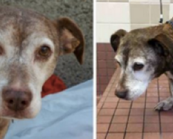 Sick Old Dog Spent 11 Years On The Streets. Gets Woken Up From A Nap To Learn Life Has Changed