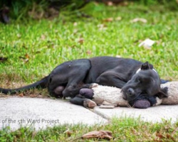 The Sight Of A Street Dog Snuggling With A Toy Leads Rescuers To A Much Bigger Problem
