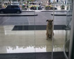 Stewardess adopts a dog after he waits for her outside her hotel every day