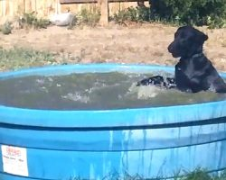 Dog Caught Having Fun In The Kiddie Pool, So Dad Grabs The Camera