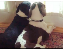 Dog Mom Wonders What Her Dogs Do All Day, Their Antics Caught on Video