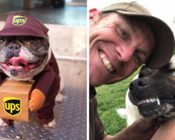 18 Of The Best Dog Photos UPS Drivers Have Taken On Their Routes