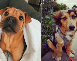 17 Of The Cutest Mixed-Breed Pups You'll Ever See