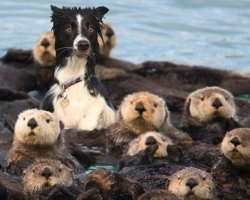 19 Animals Suffering Identity Crises Who Are Adorably Confused