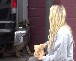 Homeless German Shepherd Cries Like A Human During Rescue, But Look At Her Today!