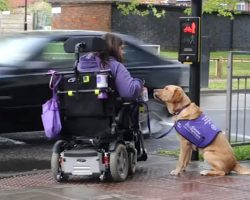 Super Dog Is Disabled Woman's Carer