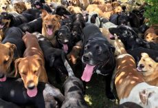A thousand stray dogs live in this doggy paradise
