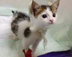 After saving this calico kitty from a dumpster, rescuer finds out this cat is actually a rare treasure