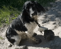 Woman Spots Wet Dog By A River, Then Sees The Makeshift Anchor Around His Neck