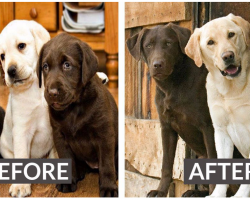 8 Heartwarming Before And After Photos Of Dogs Growing Up Together