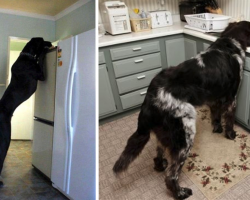 15 Dogs Who'd Need No Help Reaching The Secret Treat Cabinet