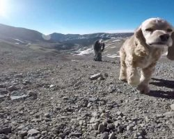 Beloved Dog Takes One Last Hike With Owner On 14er Mountain