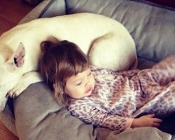 12 Reasons Why You Should Never Own Bull Terriers