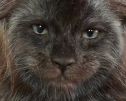 Maine Coon Kitten With Very Human-Like Face Is Freaking People Out