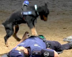 Police Dog Enthusiastically Performs CPR On Police Officer In Viral Video