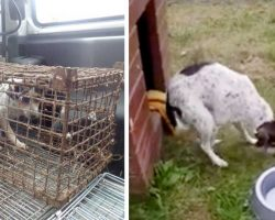 Dog Was Kept In A Cage For Too Long – She Could No Longer Walk Or Stand