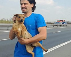 Veterinarian Saves Abandoned Dog From Middle Of Busy Highway