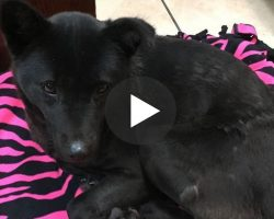 Dog Rescued From Meat Farm Who Slept Sitting Up Gets Her First Real Bed